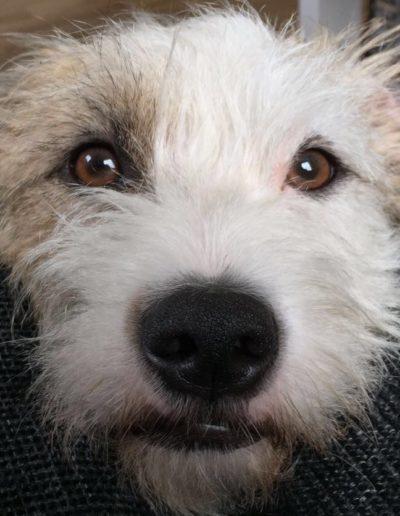 Planet Dog Hundeblog über das Leben und reisen mit Hund Kika