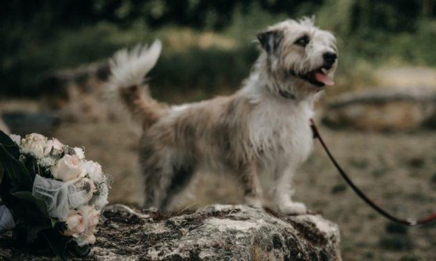 Hochzeit mit Hund – ein Erfahrungsbericht über das Heiraten mit Hund