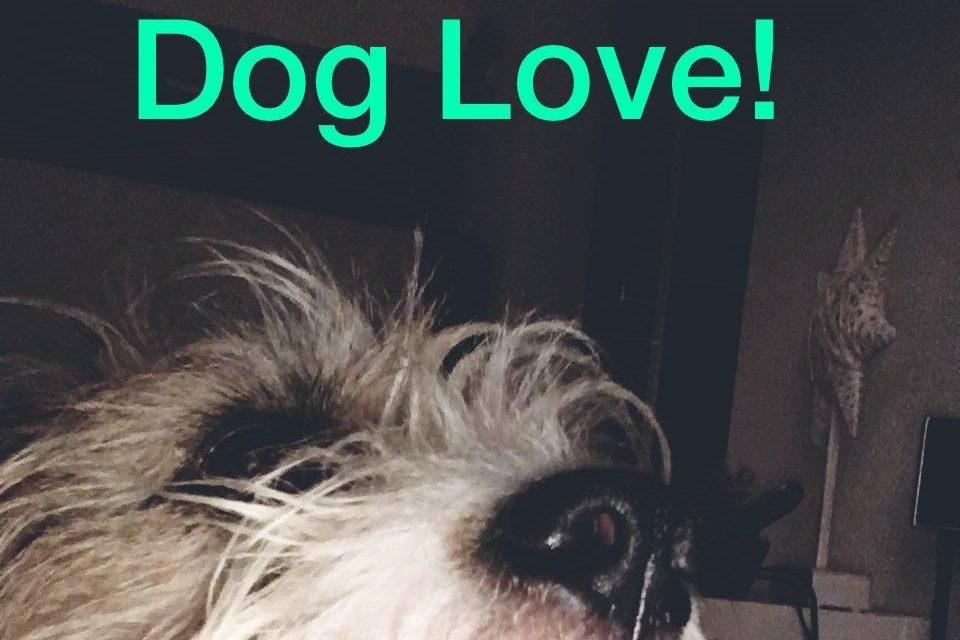Hundefans aufgepass: Heute ist Welthundetag 10.10.2018