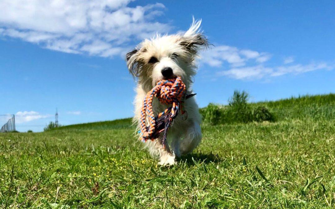 5 Vorteile einen Hund zu kaufen